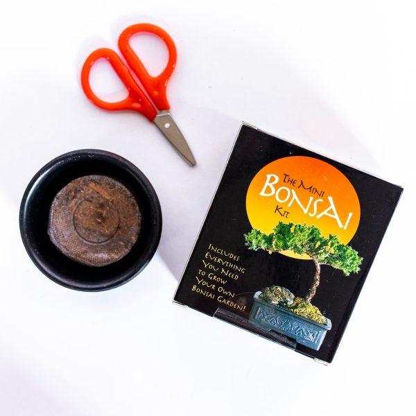 Mini Bonsai Kit